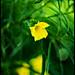 EBC Flowers by Angevinn