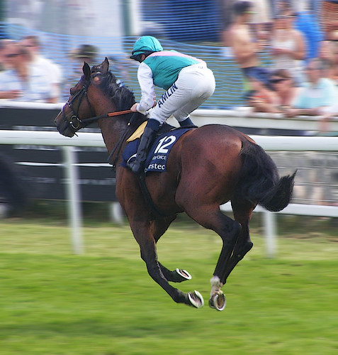 Epsom Derby 2010 - Workforce cantering down to the start