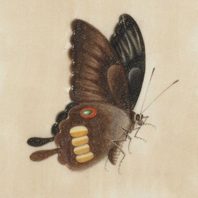 close-up hand-coloured sketch of butterfly