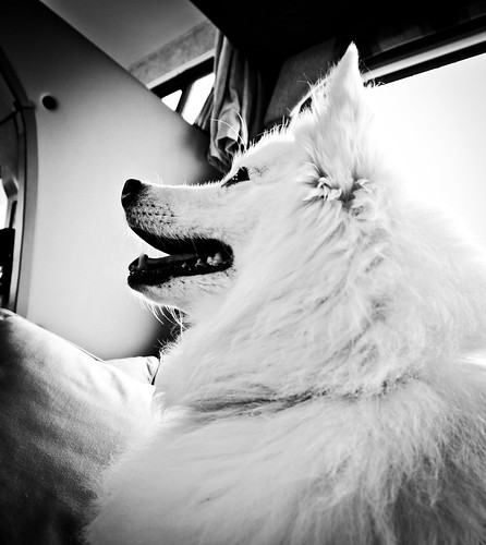 travel bw usa pets dogs nature animals iso200 washington unitedstates may noflash domestic aberdeen northamerica 16mm locations 2010 taiga americaneskimo ef1635mmf28liiusm camera:make=canon geo:state=washington exif:make=canon exif:iso_speed=200 canoneos7d apertureprioritymode hasmetastyletag selfrating3stars geo:city=aberdeen exif:focal_length=16mm 2010travel 130secatf56 geo:countrys=usa camera:model=canoneos7d exif:model=canoneos7d exif:lens=ef1635mmf28liiusm subjectdistance560mm may282010 exif:aperture=ƒ56 olympics0528201006012010 olympics2010day1 geo:lon=123825985 geo:lat=46970646 46°581433n123°493355w aberdeenwashingtonusa