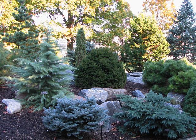 Landscape Garden Four Marks : Dwarf conifers conifer garden sunloving by