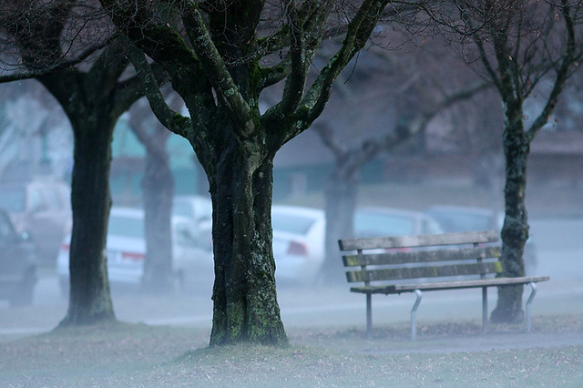 """""""An Eerie Winter Evening"""" Trees and Bench Among Groundfog at Tisdall Park in Vancouver BC 05Jan2010"""