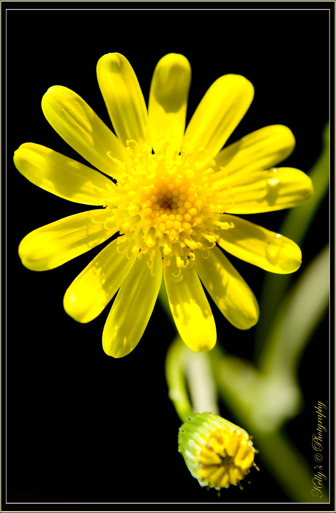 Yellow Flowers Names Flowers Names Yellow Flowers Names