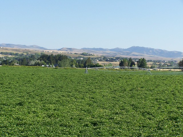 Ammon ID Potato Field 001  Flickr  Photo Sharing