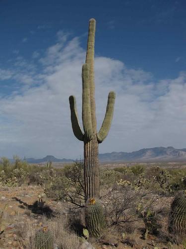 arizona usa fruits cacti landscapes desert unitedstatesofamerica gps 2009