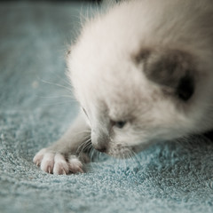 Tiny paw!