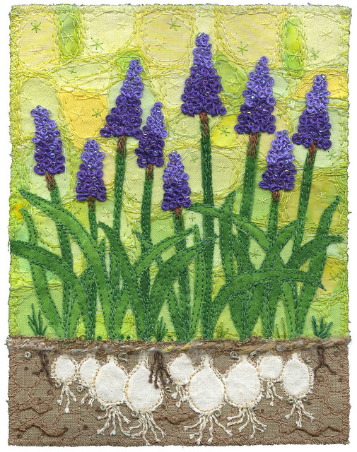 Grape Hyacinths with Bulbs