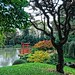 Japanese Hill-and-Pond Garden