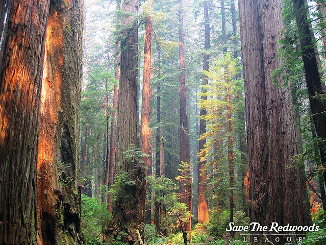 A pretty typical redwood forest.