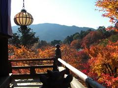 Around Sakurai