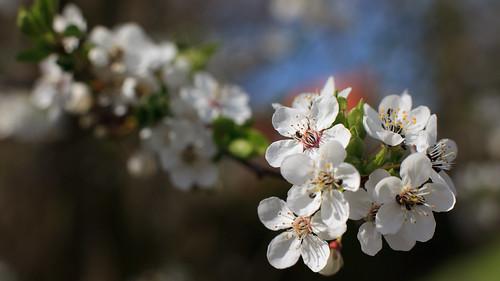 Spring / Frühling (20100418_i05_9257)