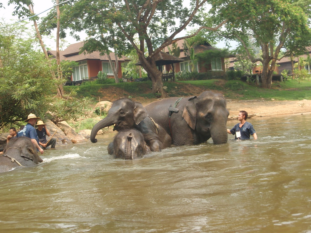 Bathing the Elephants in the River