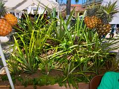 May 1 - Agricultural Producers and Artisans Fair - Cap Haitien, Haiti