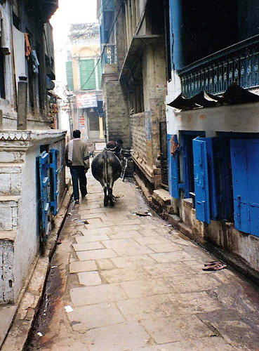Varanasi Street man with cow