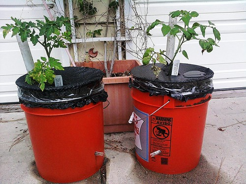 Homemade self watering plant bucket gardener q 39 s blog Self watering 5 gallon bucket garden