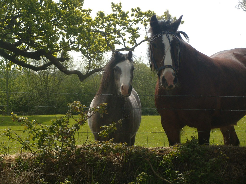 Horses Just in case you didn't know what they were. Pluckley Circular