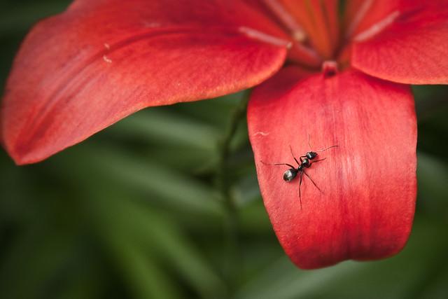 {158/365} ant