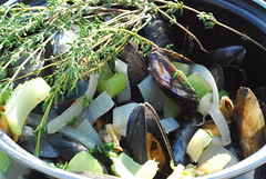 Amazing Mussels by the Sea
