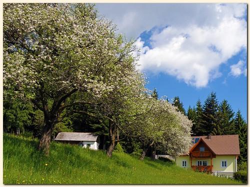 Spring scene in Styria