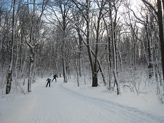 Skate skiing at Laurel Ridge State Park