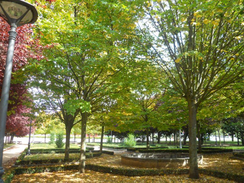 Tilo en otoño 8