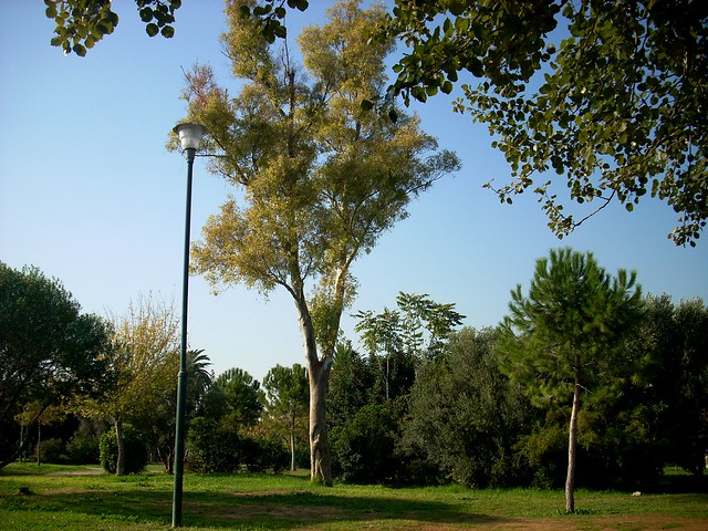 The park in Kolonos