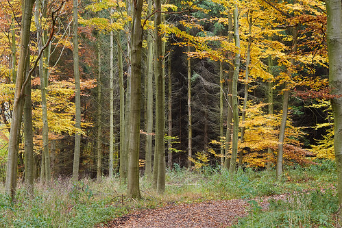 autumn autumncolours efterår freerslevhegn