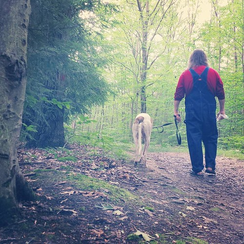 Adventurers #Cane #DogsOfInstagram #greyhound #ChestnutRidge #wny #OrchardPark #summer #overalls #dickiesworkwear #bluedenim #dungarees