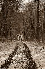 Where's the path leading II (Sepia)
