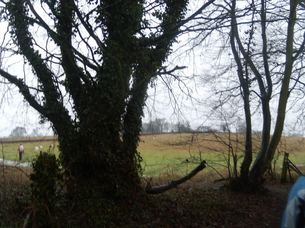 Hedgerow DSCN8575 Chorleywood to Chesham