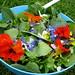 garden grown salad