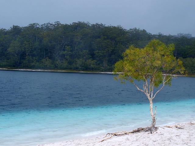 Lago McKenzie. Isla Fraser, Australia