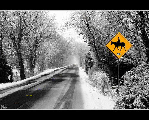 road trees horse snow sign dallas texas snowy dfw frisco snowday horsecrossing bloodworth parkimaging ©wilbloodworth