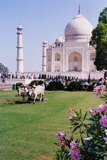 Lawn Mowing at the Taj Mahal