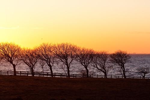 blue sunset red sky orange seascape water field silhouette yellow catchycolors skåne sweden öresund lomma canonef100mmf28macrousm