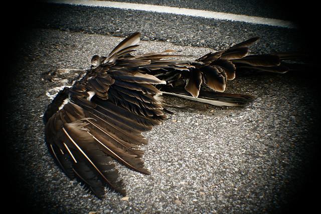 series hawk