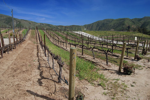 Robert Renzoni Brunello and Cabernet Sauvignon Vines decorate the hills of Temecula's De Portola Wine Trail