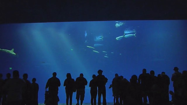 Big Tank at the Monterey Bay Aquarium