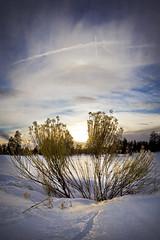 Marshall Lake Perspective - Flagstaff, AZ