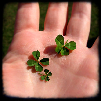 three four leaf clovers I found the other day