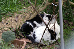 Black and White Cats: 31 March 2010