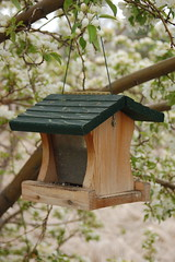 branch, birdhouse, bird feeder,