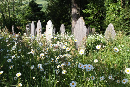 Kenwyn Churchyard, near Truro by Claire Stocker (Stocker Images)