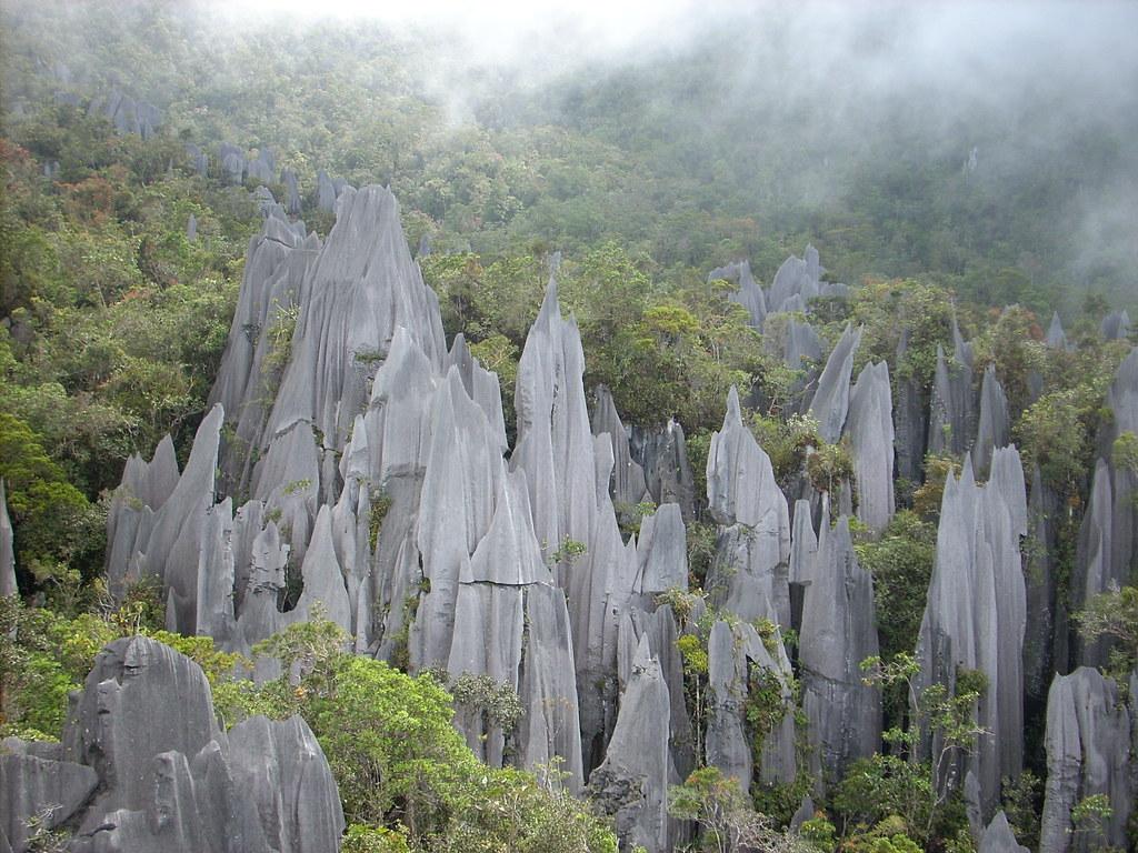 The Pinnacles Gunung Mulu National Park