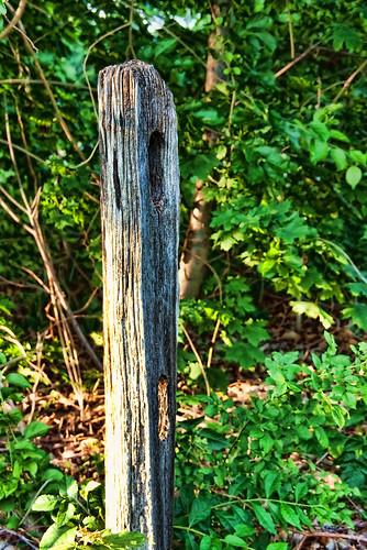 ny june fence bush post pentax longisland kiwi 2010 jjp glencove plnts k200d green2010glencovejjpk200dlongislandnyjunepentax