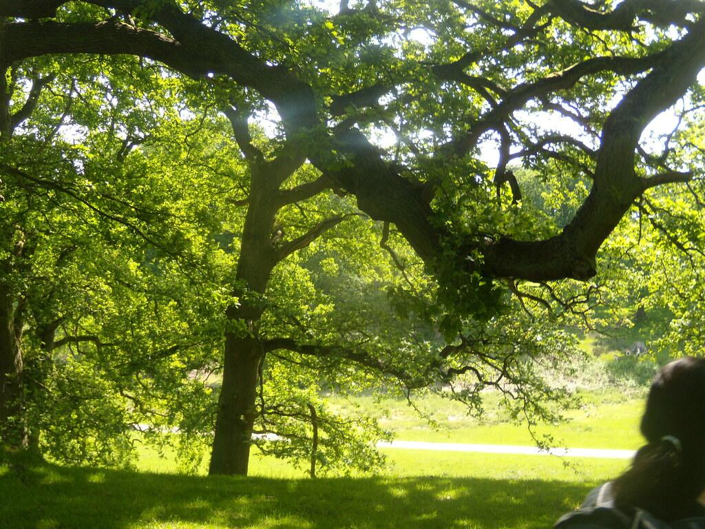 Knole Park Sevenoaks Circular