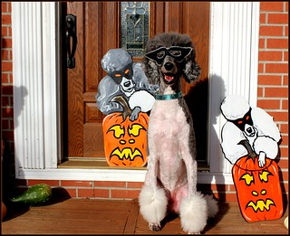 "Will the real Myles please say ""woof or treat"" 43/52"