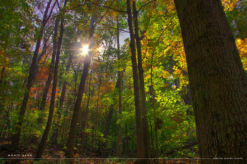 trees sun mountain green fall nature leaves season huntsville hdr