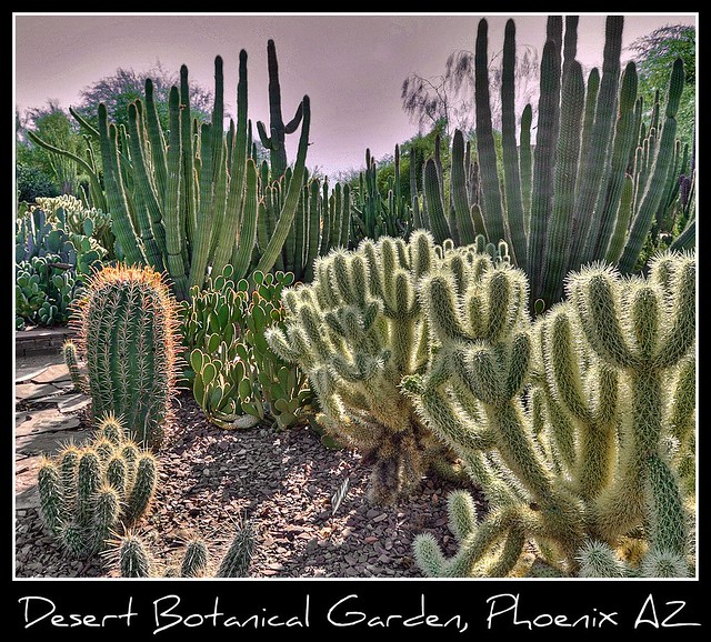 Phoenix >> Desert Botanical Garden, Phoenix AZ | Flickr - Photo Sharing!