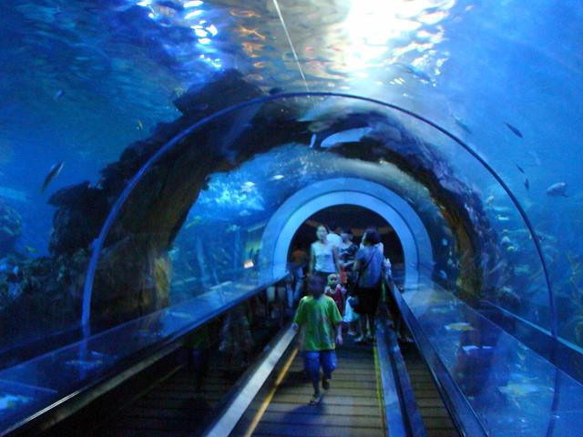 0707海底桂林 海洋馆 海底隧道